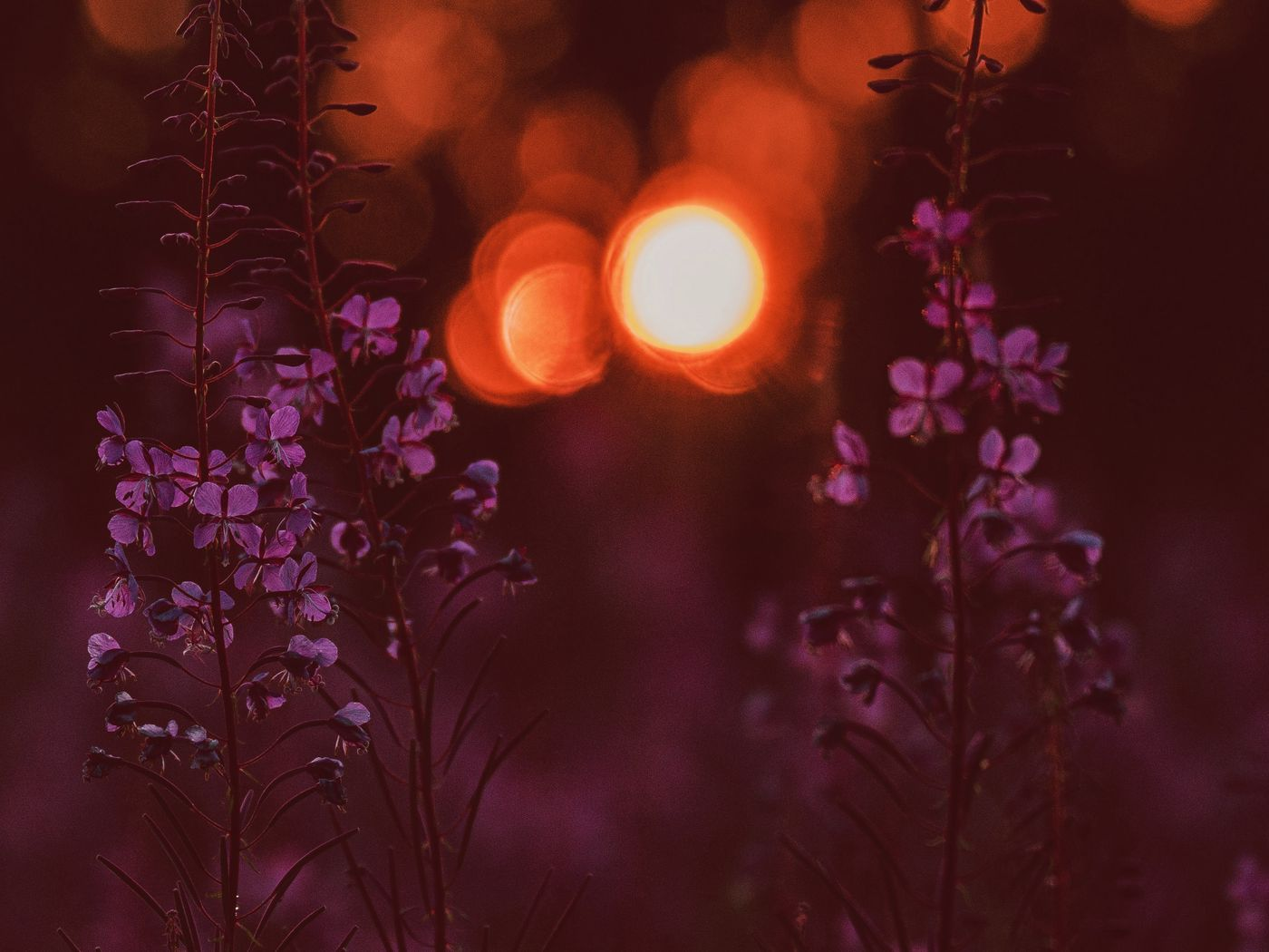 1400x1050 Wallpaper flowers, flare, bokeh, sunset, blur