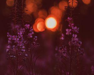 Preview wallpaper flowers, flare, bokeh, sunset, blur