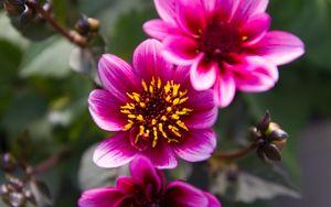 Preview wallpaper flowers, leaves, pink, macro