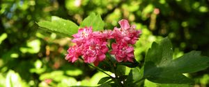 Preview wallpaper flowers, macro, beautiful, spring, green, cherry, pink