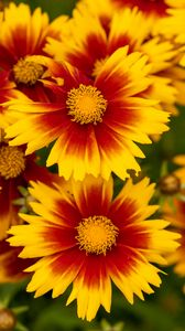 Preview wallpaper flowers, macro, bloom, yellow, red