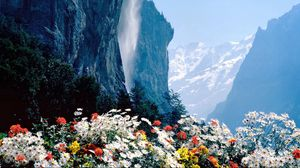 Preview wallpaper flowers, mountains, cliff