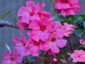 Preview wallpaper flowers, petals, pink, macro, plant