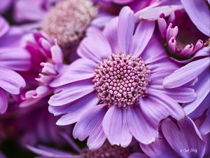 Preview wallpaper flowers, petals, plants, purple, macro