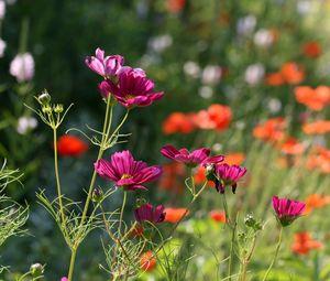 Preview wallpaper flowers, petals, plants, macro, blur