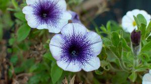 Preview wallpaper flowers, plant, macro, purple
