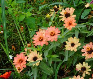 Preview wallpaper flowers, plant, macro