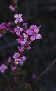 Preview wallpaper flowers, plant, macro, blur