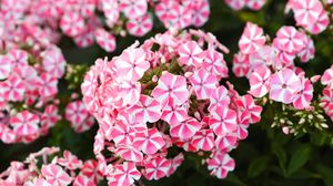 Preview wallpaper flowers, plant, pink, macro