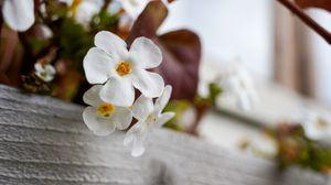 Preview wallpaper flowers, plant, white, macro