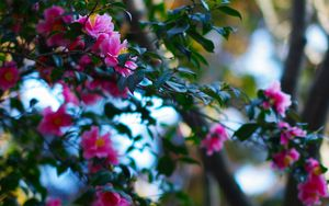Preview wallpaper flowers, plants, branches, pink