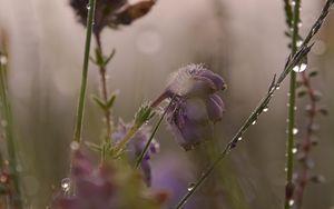 Preview wallpaper flowers, plants, drops, macro, blur