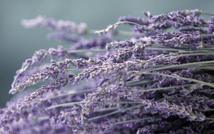 Preview wallpaper flowers, plants, vector, focus, lilac