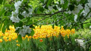 Preview wallpaper flowers, trees, gardens, tulips, spring