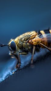 Preview wallpaper fly, insect, macro, eyes, wings