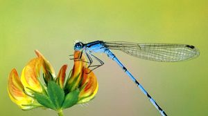 Preview wallpaper flying, insect, flower, wings