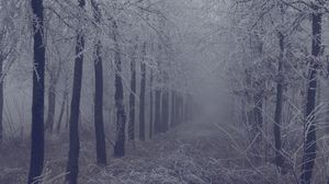 Preview wallpaper fog, forest, frost, branches, trees, grass