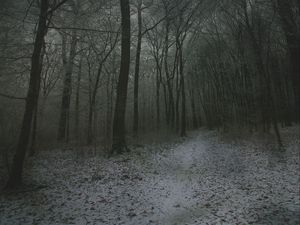 Preview wallpaper fog, forest, path, snow, autumn, winter