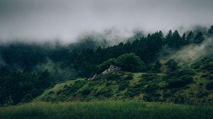 Preview wallpaper fog, forest, trees, grass, green