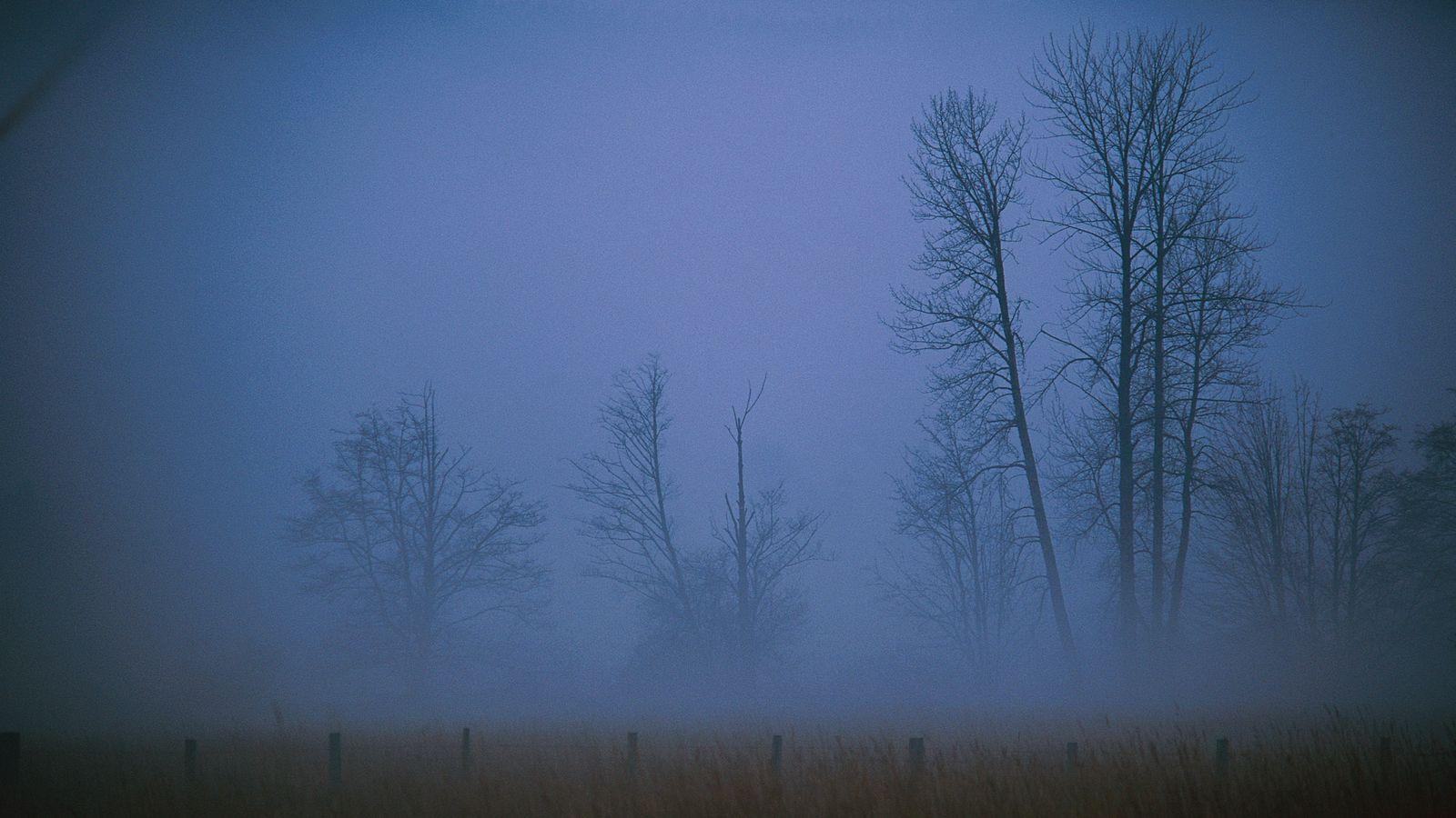 1600x900 Wallpaper fog, haze, veil, trees, field, evening