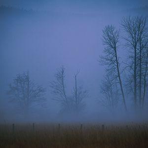Preview wallpaper fog, haze, veil, trees, field, evening