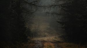 Preview wallpaper fog, path, branches, forest, trees, autumn, gloomy