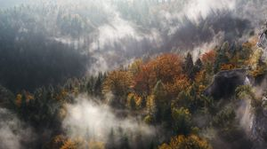 Preview wallpaper fog, trees, mountains, pinnacle