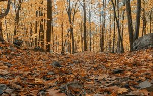 Preview wallpaper forest, autumn, trees, foliage, fallen leaves