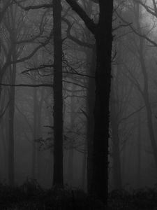 Preview wallpaper forest, fog, bw, trees, dark