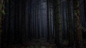 Preview wallpaper forest, fog, dark, trees, gloomy