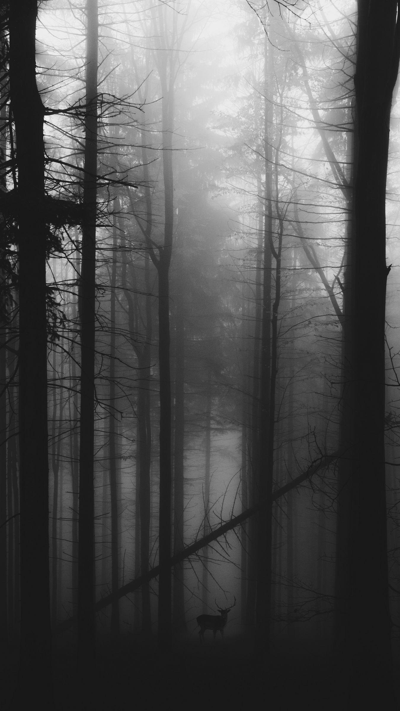 1350x2400 Wallpaper forest, fog, deer, bw, gloomy