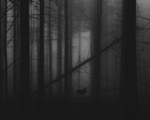 Preview wallpaper forest, fog, deer, bw, gloomy