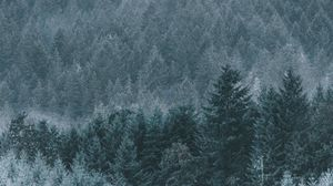 Preview wallpaper forest, fog, haze, trees, conifer