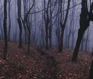 Preview wallpaper forest, fog, haze, trees
