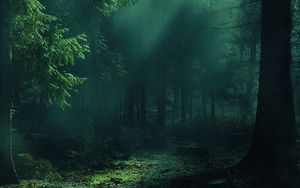 Preview wallpaper forest, fog, trees, shadows, light