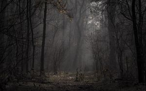 Preview wallpaper forest, fog, trees, branches, autumn