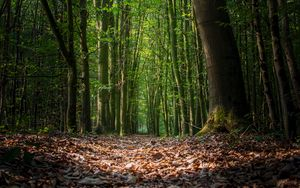 Preview wallpaper forest, foliage, trees, path, autumn