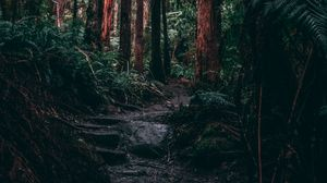 Preview wallpaper forest, jungle, path, trees, fern, tropics