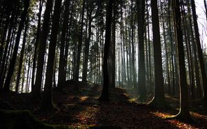 Preview wallpaper forest, ray, trees, foliage