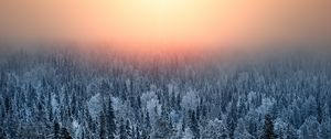 Preview wallpaper forest, sunset, haze, snow, winter, landscape