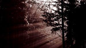 Preview wallpaper forest, trees, dawn, haze, sunbeams, dark