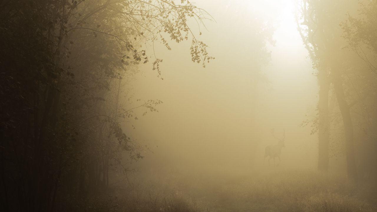 Wallpaperforest,trees,fog,nature,twilight高清壁纸免费下载