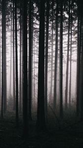 Preview wallpaper forest, trees, fog, darkness, nature