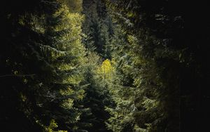 Preview wallpaper forest, trees, foliage, branches