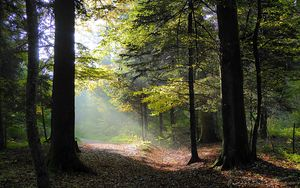 Preview wallpaper forest, trees, foliage, autumn, rays