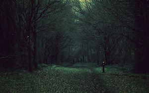 Preview wallpaper forest, trees, gloomy, foliage, fallen