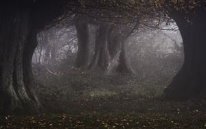 Preview wallpaper forest, trees, haze, gloomy, autumn, landscape