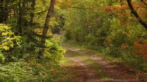 Preview wallpaper forest, trees, leaves, path, landscape