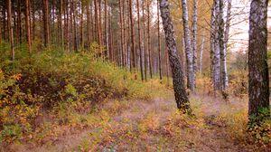 Preview wallpaper forest, trees, nature, autumn, landscape