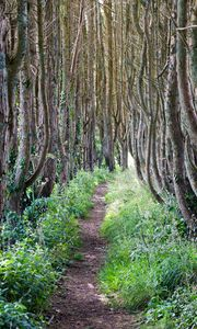 Preview wallpaper forest, trees, path, grass, landscape